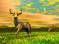 Bucks in ntaure d render vigilent buck standing another the background by sunset Royalty Free Stock Photos