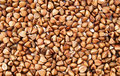 Buckwheat Royalty Free Stock Photo