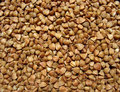 Buckwheat close up. Background Stock Photos