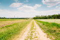 Buckwheat field and country road at spring day Royalty Free Stock Photo
