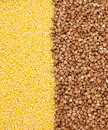 Buckwheat and millet background Stock Images