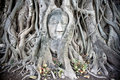 Buddha of Ayutthaya Stock Photography