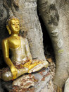 Buddha in a banyan tree sukhothai thailand Stock Photos