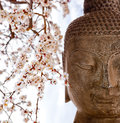 Buddha and cherry blossoms face with Stock Photos