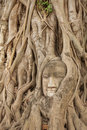 Buddha face in root of tree in temple Royalty Free Stock Photos