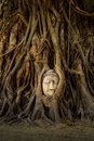 Buddha face in tree from ayuthaya thailand Royalty Free Stock Image