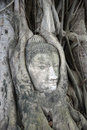 Buddha face in tree roots Royalty Free Stock Photography