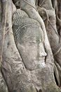 Buddha head. Royalty Free Stock Images