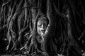 Buddha head covered by roots of a tree in Watmahathat at Ayutthaya Thailand Royalty Free Stock Photo