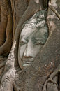 Buddha head encased in tree roots Stock Images