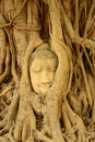 Buddha head encased in tree roots thailand Royalty Free Stock Photo