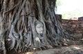 Buddha head in roots