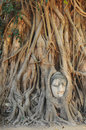 Buddha head statue in banyan tree at thailand Royalty Free Stock Photos