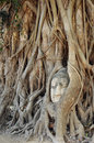 Buddha head statue in banyan tree at thailand Stock Photo