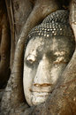 Buddha head statue in banyan tree at thailand Stock Photography