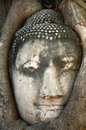 Buddha head statue in banyan tree at thailand Royalty Free Stock Image