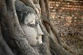 Buddha head statue in banyan tree at thailand Stock Image