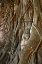 Buddha head statue in banyan tree at thailand Royalty Free Stock Images