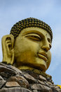Buddha head Statute Royalty Free Stock Photo