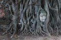 Buddha Head in Tree Roots, Wat Mahathat, Ayutthaya Royalty Free Stock Photo