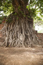 Buddha head in a tree Royalty Free Stock Photo
