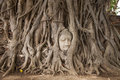 Buddha head in a tree Royalty Free Stock Photo