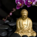 Buddha with Orchid Royalty Free Stock Photo