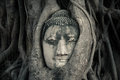 Buddha s head ayutthaya thailand in roots Stock Photo