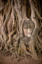 Buddha's head in banyan tree roots Stock Images
