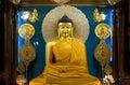 Buddha Shakyamuni Stock Image