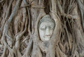 Buddha statue in the roots of tree at , Ayutthaya, Thailand Royalty Free Stock Photo
