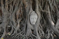 Buddha statue in tree Stock Photo