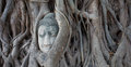Buddha in the tree ayutthaya tourist attraction thailand Stock Photos
