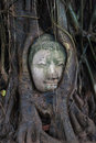Buddha in the tree face Stock Images