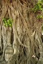 Buddhas head banyan tree thailand Stock Image