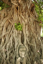 Buddhas head bayan tree roots sukhothai  thailand Royalty Free Stock Photos