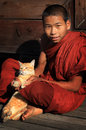 Buddhist novice with cat smiling burmese a in a teak monastery in nyaungshwe myanmar Stock Photography
