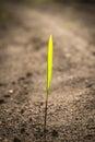 Budding Plant Stock Image