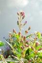 Buds In The Garden