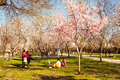 Buen retiro madrid spain march people enjoy spring day near blooming fruit trees in park in march in madrid spain park Royalty Free Stock Photo