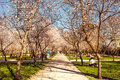 Buen retiro madrid spain march people enjoy spring day near blooming fruit trees in park in march in madrid spain park Royalty Free Stock Image