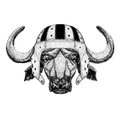 Buffalo, bull, ox Wild animal wearing rugby helmet Sport illustration