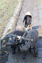 Buffalo farmer ploughing rice paddies with water buffaloes in klaten central java indonesia Stock Image