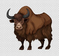 Buffalo with long hair