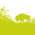 Buffalo on the prairie green Royalty Free Stock Photos
