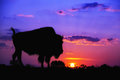 Buffalo silhouette at sunrise american bison against or sunset Royalty Free Stock Photos