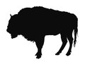 Buffalo silhouette Royalty Free Stock Photo