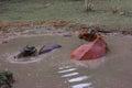 Buffalos soak water with mud and Stock Photos