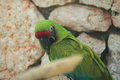 Buffon macaw the detail of Royalty Free Stock Image