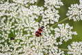 Bug enjoys flower close up Royalty Free Stock Photo